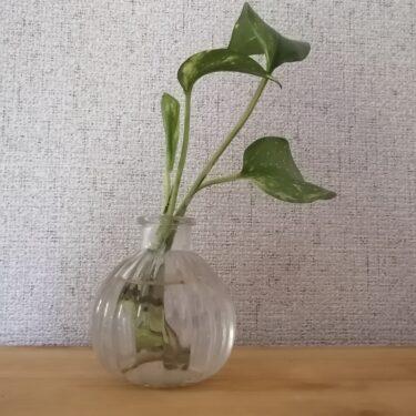 水耕栽培でも肥料や活力剤があると違う。