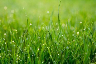 朝から草むしり。